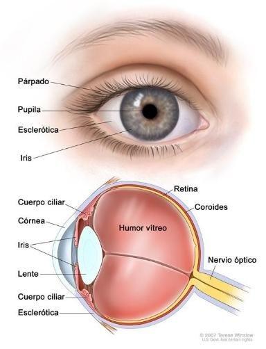 ojo esquema
